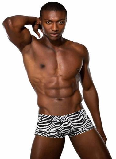 Doreanse Boxer Zebra
